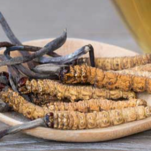 Грибок кордицепс: 7 главных преимуществ этого чудо-гриба