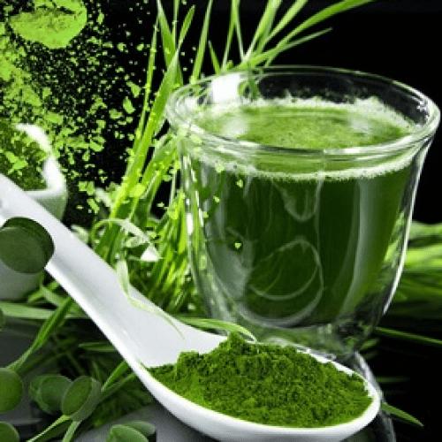 В чем польза хлорофилла для здоровья человека?
