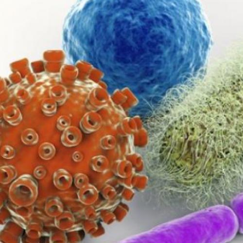 Три важных питательных вещества, необходимых для правильной иммунной функции