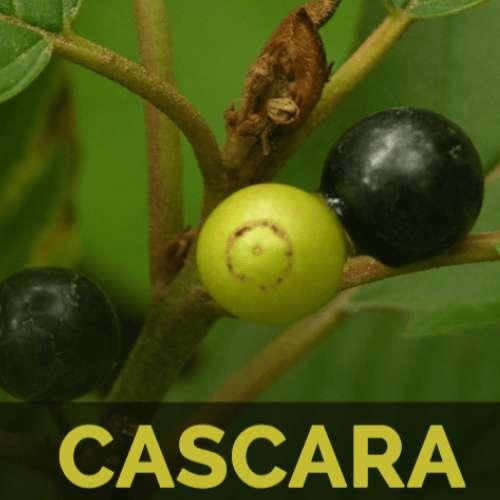 10 полезных свойств Cascara Sagrada для кожи, волос, похудения и здоровья
